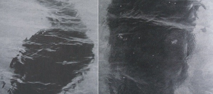 Unexplained Pictures – The Hook Island Sea Monster