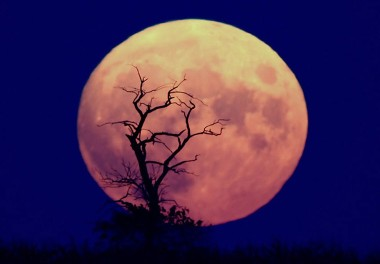 Did Aliens bring the moon to earth?