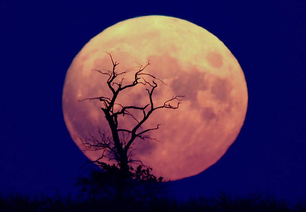 blue-moon-new-years-eve_11722_990x742
