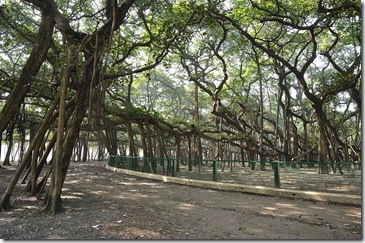 Banyan Tree-Amazing Random Facts About India