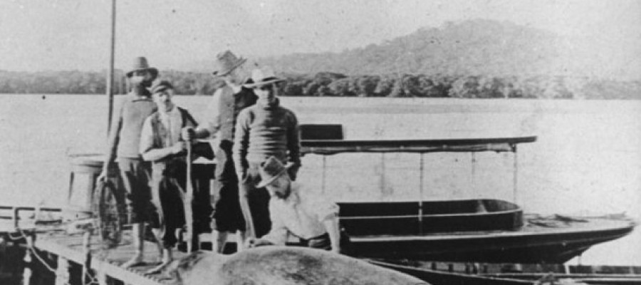 The strange legend of the Hawkesbury River Monster