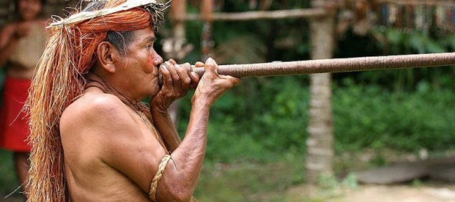 Mystery surrounds Australasian DNA link