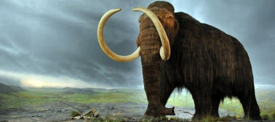 Russia sets up mammoth cloning laboratory