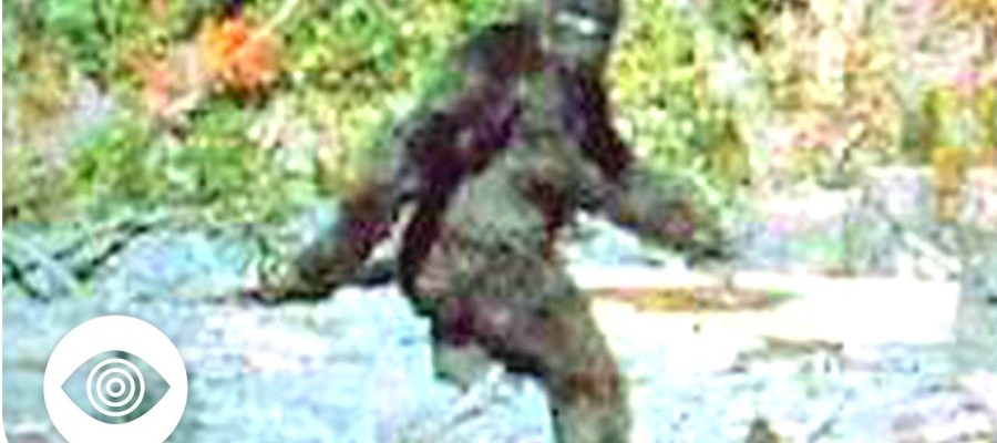 Does Bigfoot Exist?