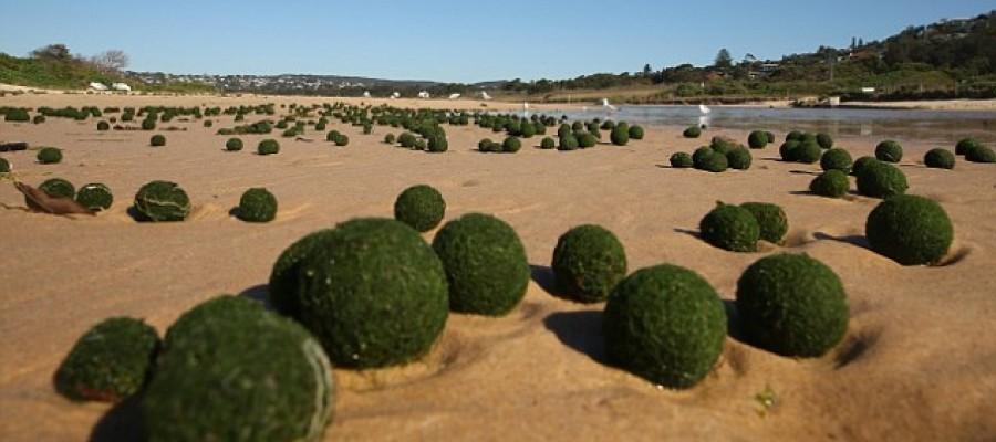 Strange green spheres wash up in Sydney