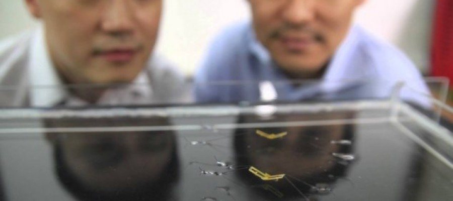 Team develops water-walking robot insects