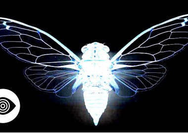 Who Are Cicada 3301 Working For?