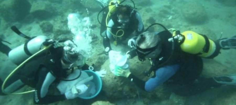 'Ghost coin' found in Portuguese shipwreck