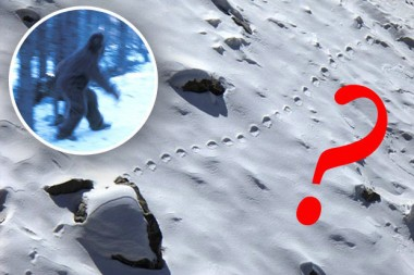 Do these photo finally prove Yeti is real ?