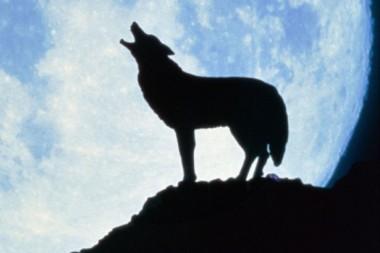 Werewolf terror in UK, beast is on the prowl!