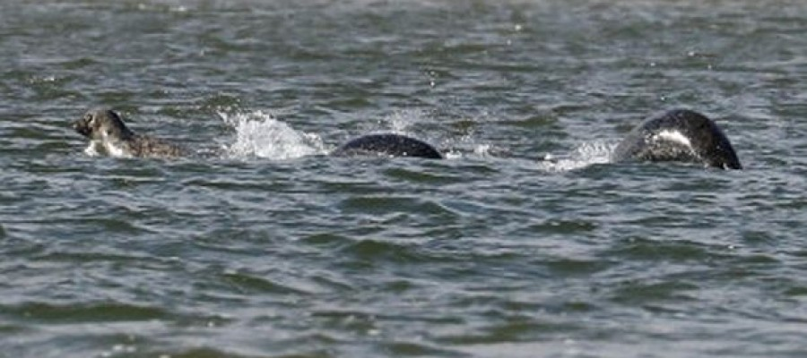 The clearest ever photo of Loch Ness Monster