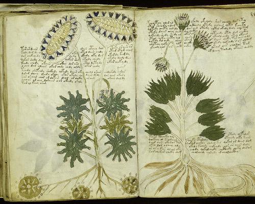 Is the Voynich manuscript a hoax?