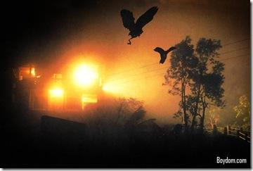 Jatinga-Assam-(Mass-Bird-Suicides)-Mind-Blowing, Shocking and Amazing Facts about India
