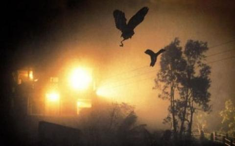 Jatinga-Assam-(Mass-Bird-Suicides)-Mysterious Places in India